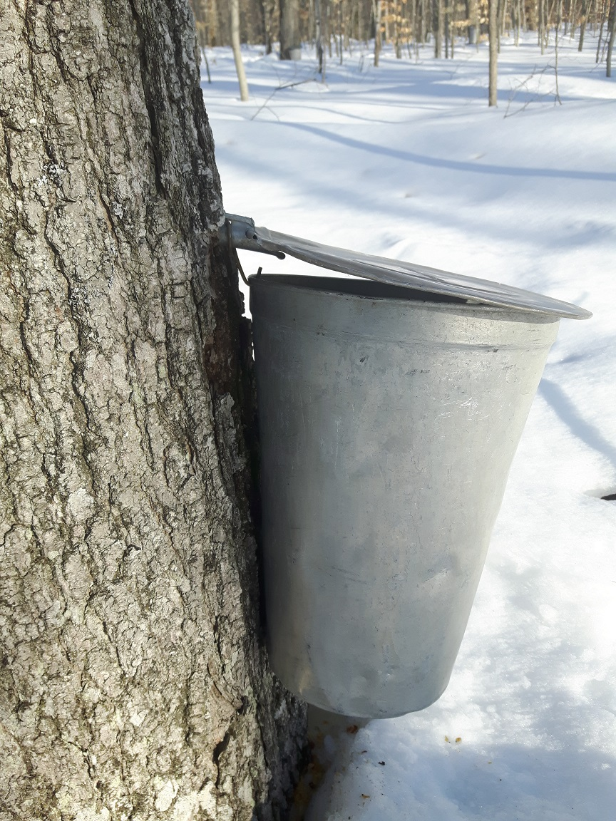 5 Maple Sap Syrup 5//16 Taps Stainless Steel Spouts Pails Spiles For Buckets